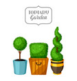 boxwood topiary garden plants decorative trees in vector image