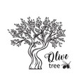 hand drawn olive tree i vector image vector image
