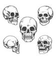 Hand drawn skulls vector image vector image
