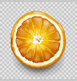 orange or lemon cut in half top view citrus fruit vector image
