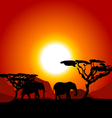Silhouettes of elephants on African sunset vector image