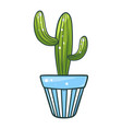 cactus in a pot green home plant icon vector image