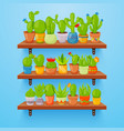 cactuses and succulents in flower pots on shelves vector image