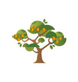 green tree with apricots garden plant with ripe vector image