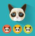 grumpy cat portrait with flat design vector image vector image