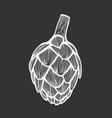 artichoke vector image
