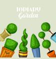 boxwood topiary garden plants decorative trees in vector image vector image