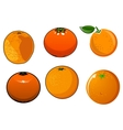isolated ripe and juicy orange fruits vector image vector image