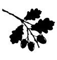 oak leaf acorn and branch isolated silhouette vector image vector image