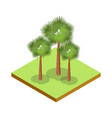 palm tree isometric 3d icon vector image vector image