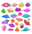 sea shells exotic marine cartoon clam-shell vector image