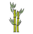 bamboo plant nature icon vector image vector image