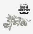 olive branch hand drawn vintage vector image vector image