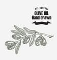 olive branch hand drawn vintage vector image