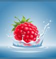 raspberry in water splash vector image vector image