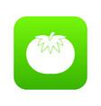 tomato icon digital green vector image vector image