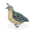 a bird quail vector image