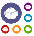 cabbage icons set vector image vector image