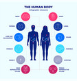 human body infographic elements male and female vector image