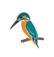 kingfisher bird design on white background vector image vector image