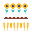 sunflowers and wheat products vector image