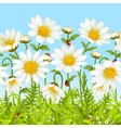 white flower and green grass vector image