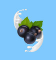 yogurt or milk splash with black currant vector image vector image