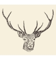 Deer Head Vintage Hand Drawn vector image vector image