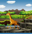 scene with giraffe at zoo vector image vector image