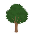 tree nature isolated vector image