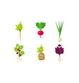 vegetables with leaves and roots set organic vector image vector image