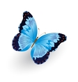 Bright blue butterfly isolated vector image vector image