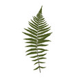 fern leaf silhouette background vector image vector image