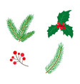 flat holly spruce leaves branch berry set vector image