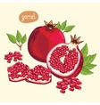 Pomegranate isolated vector image vector image