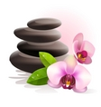 spa stones and orchid vector image