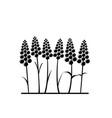 stylized lavender flower vector image vector image