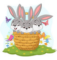 three rabbits cartoon in basket vector image vector image