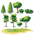 plants vector image