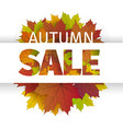 fall sale design autumn discount fall vector image vector image