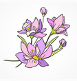 flower watercolor branch vector image