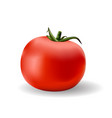 red ripe tomato vector image