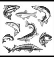 set fishes fresh seafood template design vector image