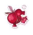 sticker with hand drawn pomegranate branch vector image vector image