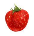 strawberry fruit with green leaf on top vector image vector image