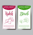 vegetable element of radish and broccoli vector image