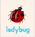 word card with ladybug insect vector image