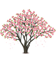 Japanese cherry tree blossom over white vector image