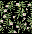 pink peonies with green leaves on dark grey vector image vector image
