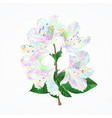 rhododendron branch flowers colorful vector image vector image